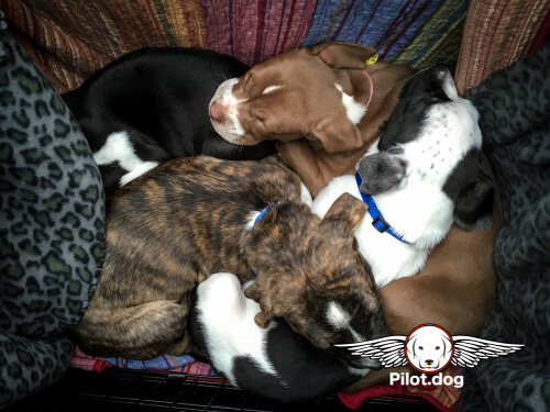 20151231_Holly's_Puppies_PR_(3_of_77)
