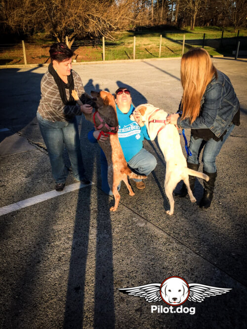 Sarah is the one to the far left in the parking lot photo. Her boyfriend and ride along partner Peter Rogers took the photo and helped mind the dogs while she drove. It was his very first experience with rescue transport and volunteering. She hopes to include him on future rides too!
