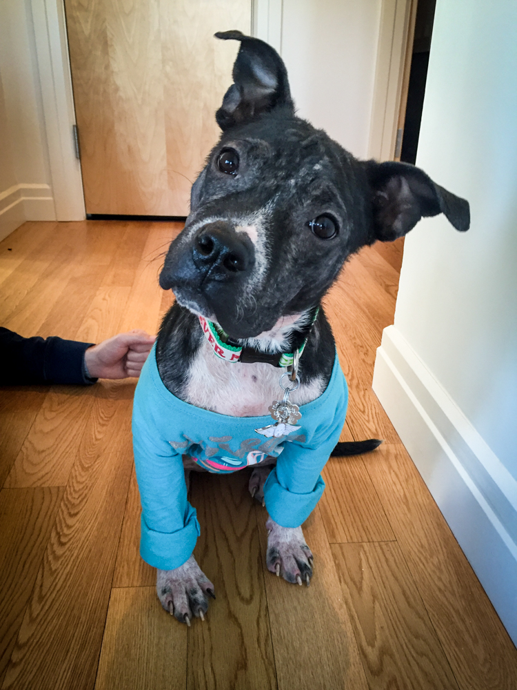 Dog Rescue Harlow