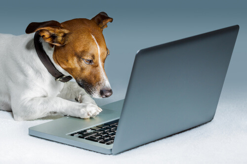 Dog using a laptop and surfing the web