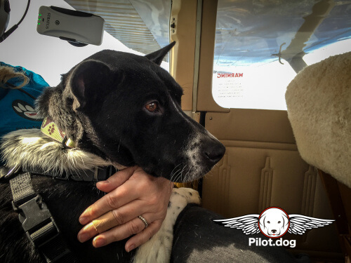 Danny was a perfect passenger on his Pilot.Dog flight to his new home.