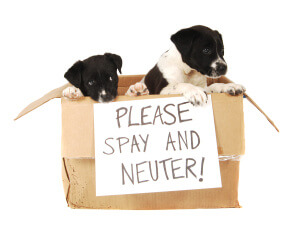 spay or neuter