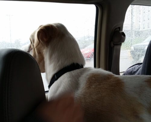 Jake looking out the window on his journey.