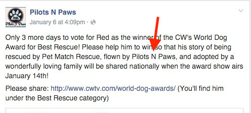 Flown by Pilots N PAws