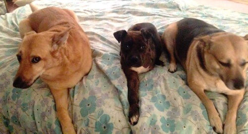 Maximus with his two siblings in his forever home.