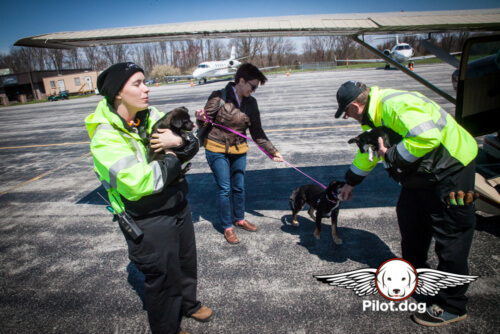 20160406-Puppies_Bones_(106_of_162)