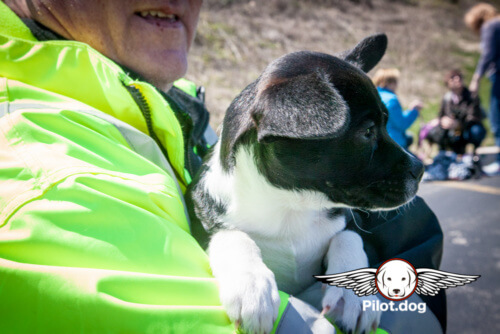 20160406-Puppies_Bones_(124_of_162)