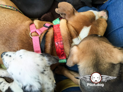 20160508_PR_Dallas_Pups_(58_of_69)