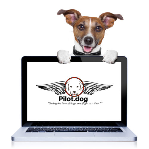 computer-dog-logo